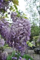 http://data4.gallery.ru/albums/gallery/146617-97080-34199685-h200.jpg