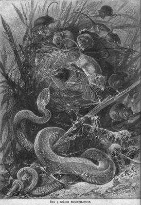 Вагнер Н. П. Картины из жизни животных.