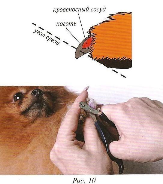 Как в домашних условиях подстричь кошке когти