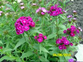 У меня в садочке- выросли цветочки! - Страница 5 270386-3d6e2-32920301-h200