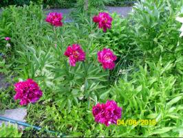 У меня в садочке- выросли цветочки! - Страница 5 270386-7c29b-32920328-h200