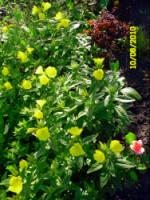 У меня в садочке- выросли цветочки! - Страница 5 270386-95803-33035782-h200