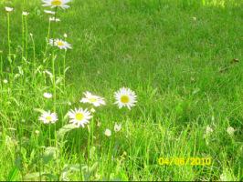 У меня в садочке- выросли цветочки! - Страница 5 270386-96a1a-32918962-h200