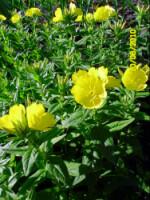 У меня в садочке- выросли цветочки! - Страница 5 270386-99e0d-33035784-h200