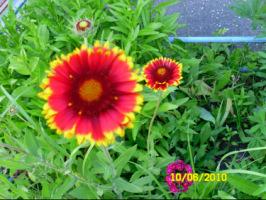 У меня в садочке- выросли цветочки! - Страница 5 270386-9c810-33035779-h200