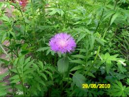 У меня в садочке- выросли цветочки! - Страница 5 270386-b5416-32918940-h200