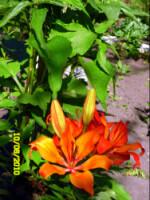 У меня в садочке- выросли цветочки! - Страница 5 270386-d5d6d-33035781-h200