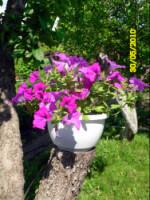 У меня в садочке- выросли цветочки! - Страница 5 270386-d8b6e-32918938-h200