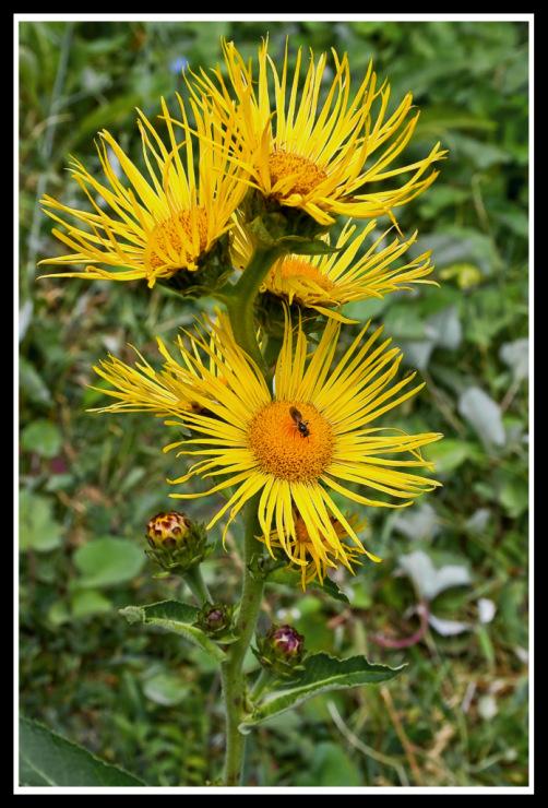 Мушка на цветке - Страница 3 42748--9296343-m750x740